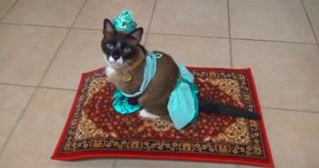 空飛ぶ絨毯に乗る猫