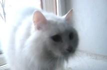 不思議な声で鳴く猫
