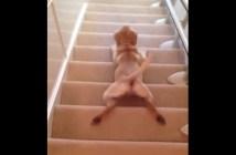 滑らかな犬