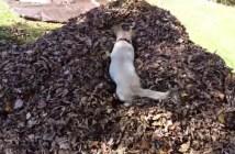 落ち葉に飛び込む犬