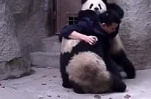 飼育員とパンダ