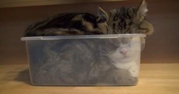 プラスチックと猫