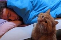 飼い主さんの起床を待つ猫