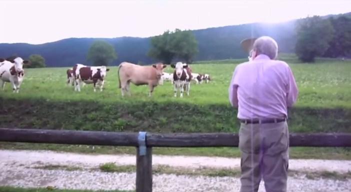 牛が気づく