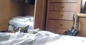 ベッドを覗く猫