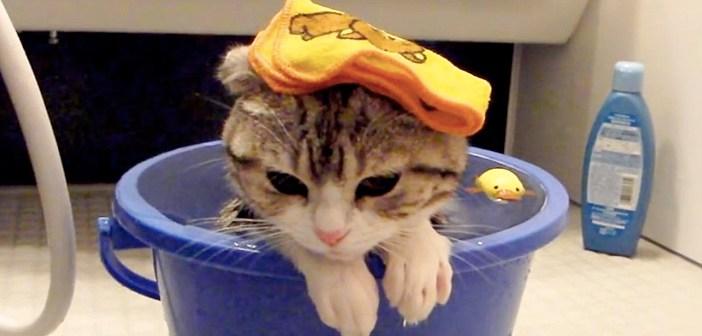 風呂でくつろぐ子猫