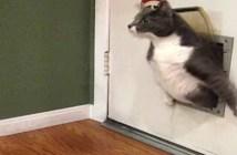 猫専用出入り口にひっかかる猫