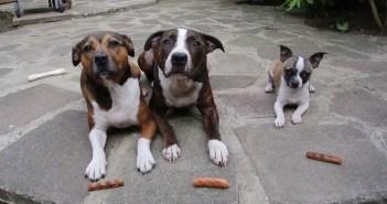 待てに従う3匹の犬