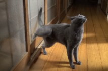 連続ノックする猫