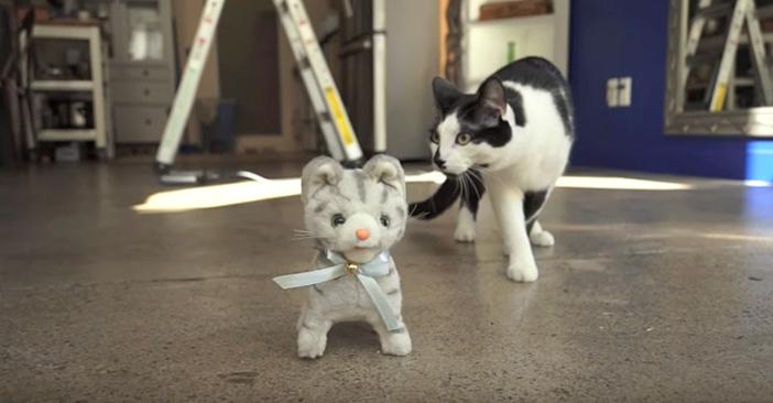 猫のぬいぐるみにドキドキする猫