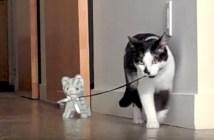 猫のぬいぐるみといっしょに散歩する猫