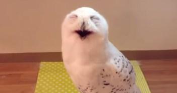笑うフクロウ