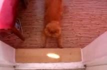 光を追いかける猫