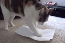 紙にそっと座る猫