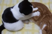 マッサージする子猫