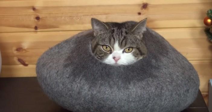 クッションから顔を出す猫