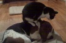 犬をマッサージする猫