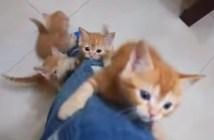 足を登る猫