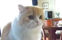 おはようとしゃべる猫