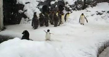 ハイテンションなペンギン