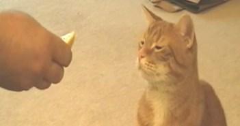 酸っぱい顔をする猫
