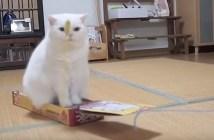 猫の電車ごっこ