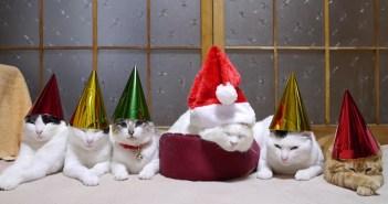 のせ猫のクリスマス
