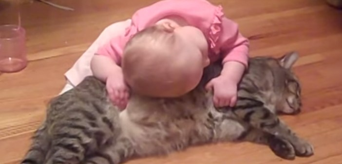 仲良しな赤ちゃんと猫