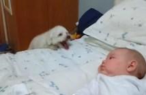 赤ちゃんを見たい犬