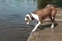 水の中から石を拾う犬