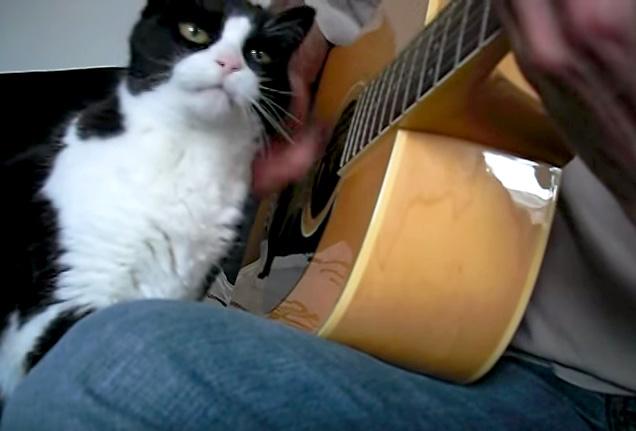 ギターに寄り添う猫