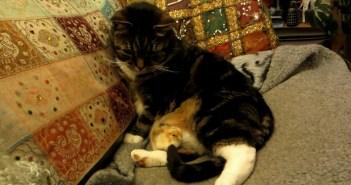 猫の足の上に乗るヒヨコ