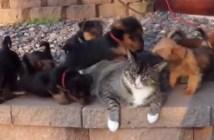 子犬に囲まれる猫
