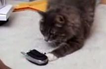着信音に鳴き返す猫