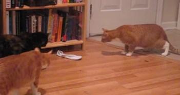靴下が恐い猫