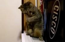 見えない敵と戦う猫