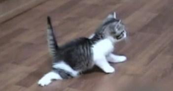 ムーンウォークする子猫
