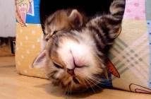 寝落ちする子猫