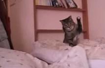 超高速猫パンチを繰り出す猫