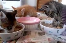 食事中に眠くなってしまった子猫