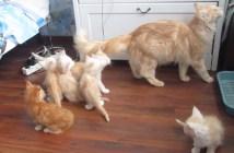 母猫についていく子猫
