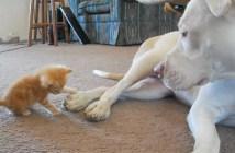 犬の足が気になる子猫