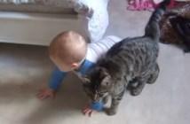 赤ちゃんにピッタリと寄り添う猫