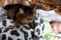 赤ちゃんを優しく寝かしつける猫