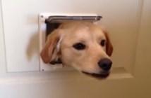 猫用のドアから顔を出す犬