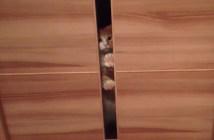 肉球百烈拳を繰り出す猫