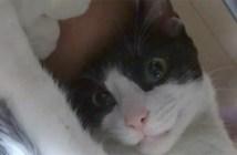 机の下からのぞく猫