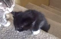 初めて階段を上る子猫