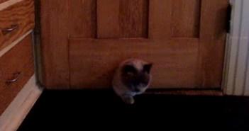 猫用の出入り口に挟まったポッチャリ猫