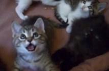 猫じゃらしを追う猫